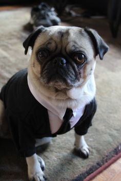 9b69707b3d835478e25e90cab79b0f95--men-in-black-pug